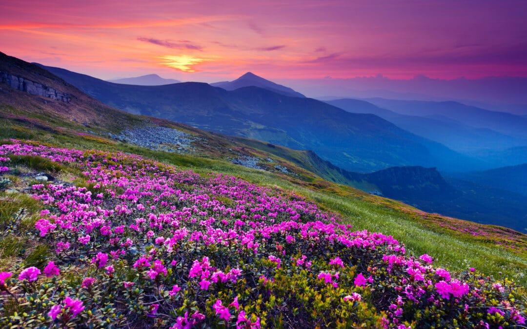 Prayer can Move Mountains